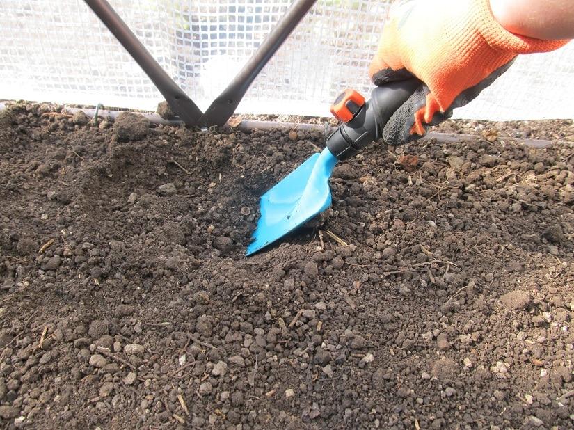 ein Loch für eine Tomate wird gegraben