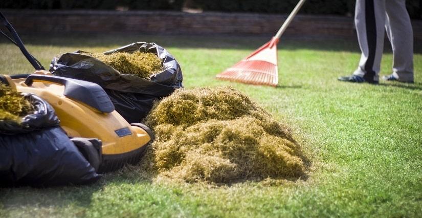 Hobbygärtner vertikutiert seinen Rasen und sammelt den Rasenfilz in Gartenabfallsäcken