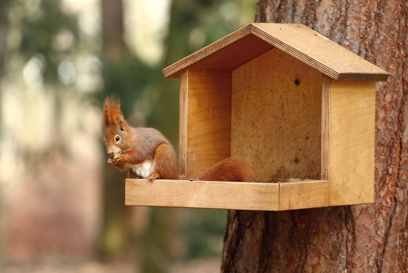 Eichhörnchen Futterstation für den Garten