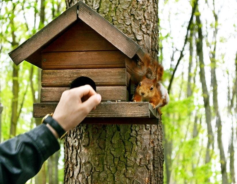 Ein rauer Baustamm ist vorteilhaft für die Eichhörnchen