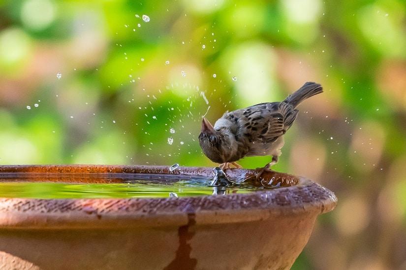 Wenn du nun einen sauberen, sicheren Trinkplatz in deinem Garten zur Verfügung stellst, wird dieser die Vögel förmlich anziehen.