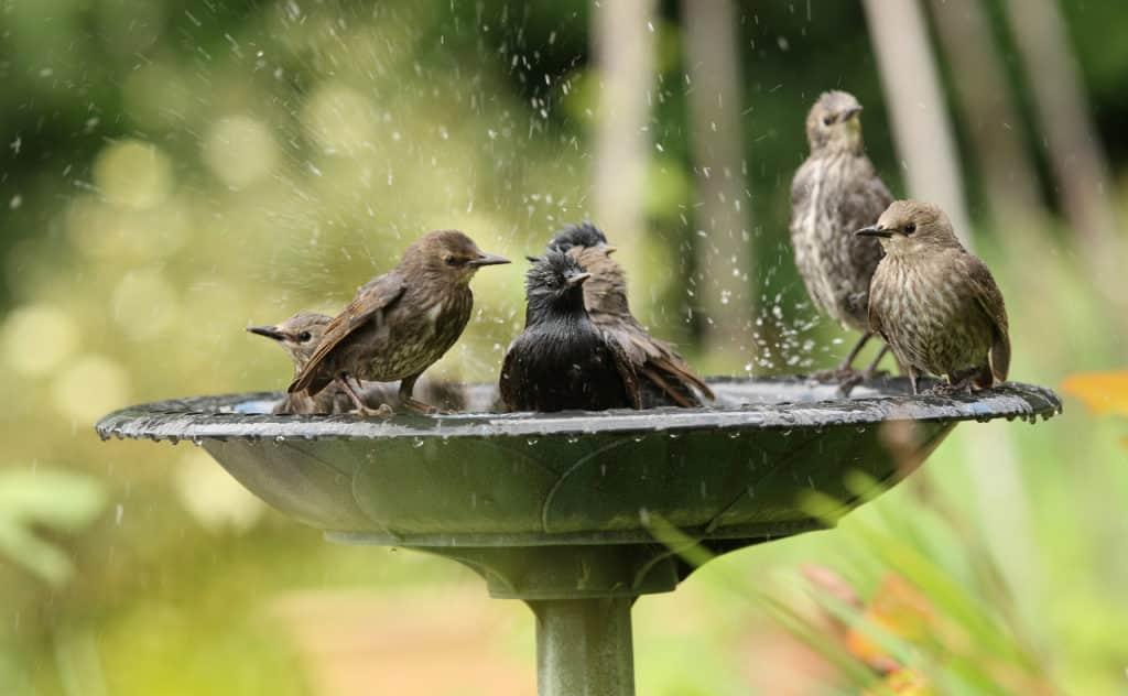 Vogeltränke stehend