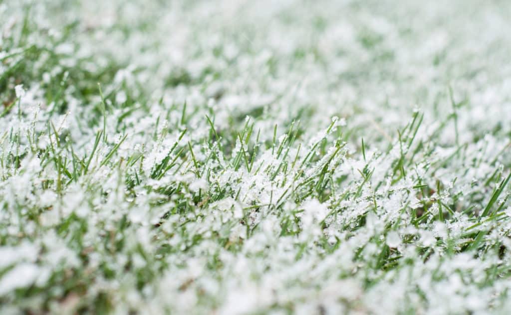 Winterschutzzelt