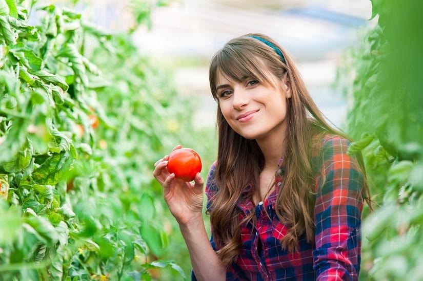 Jetzt geht es um die Vorteile des Tomatendachs
