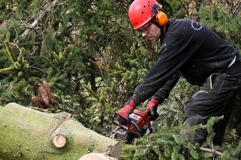 Holzfäller mit Schutzausrüstung zur Nutzung der Kettensäge