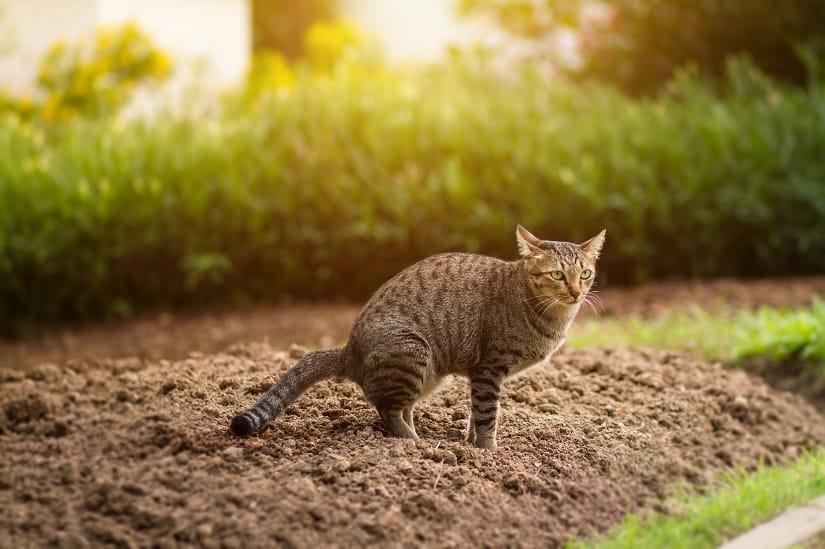Marderkot wird oft mit Katzenkot verwechselt