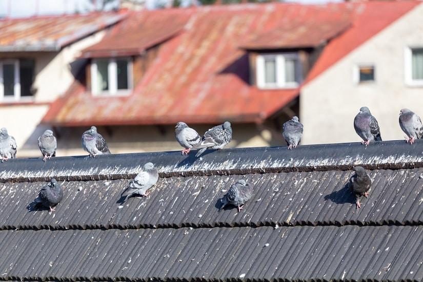 Taubenschutz fürs Dach