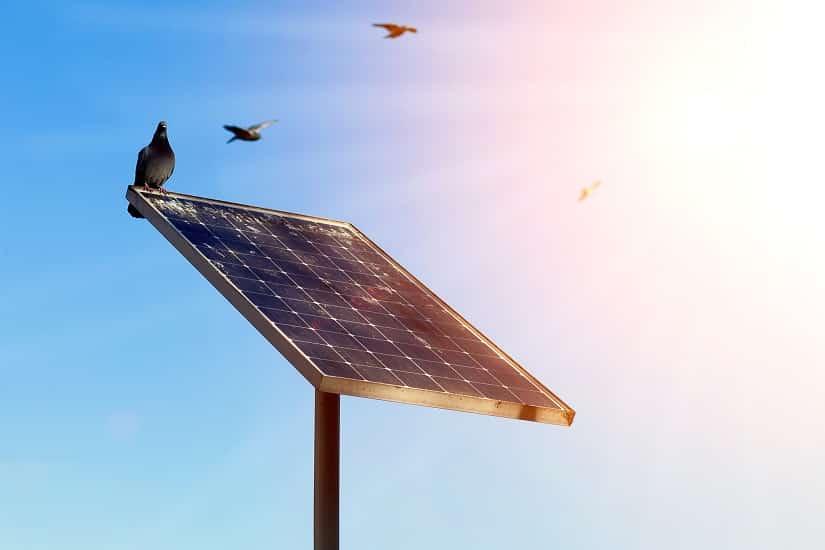 Taube auf Solarmodul