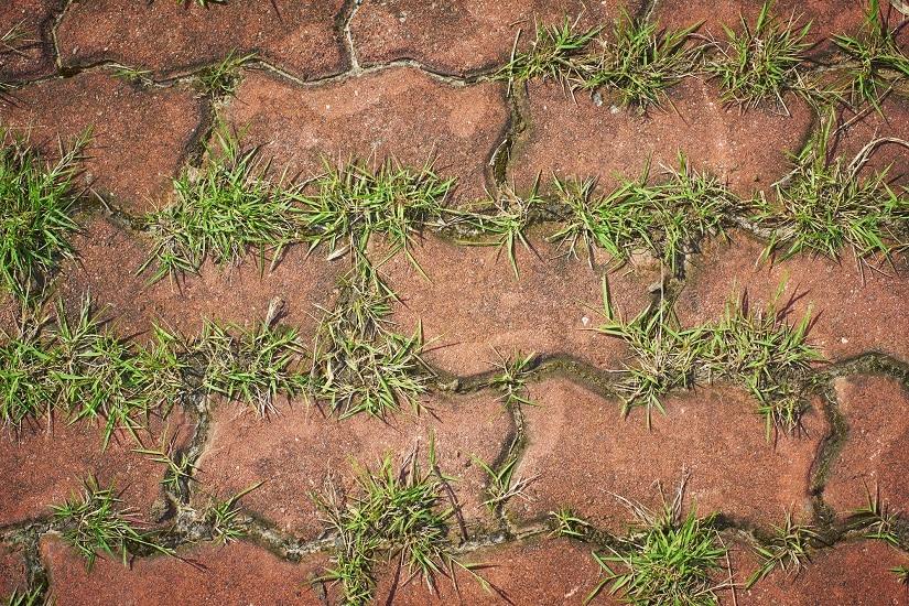 Gras zwischen Pflastersteinen