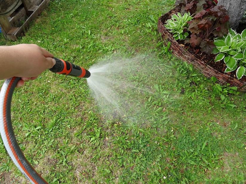 Rasen wird nach der Düngung gut bewässert