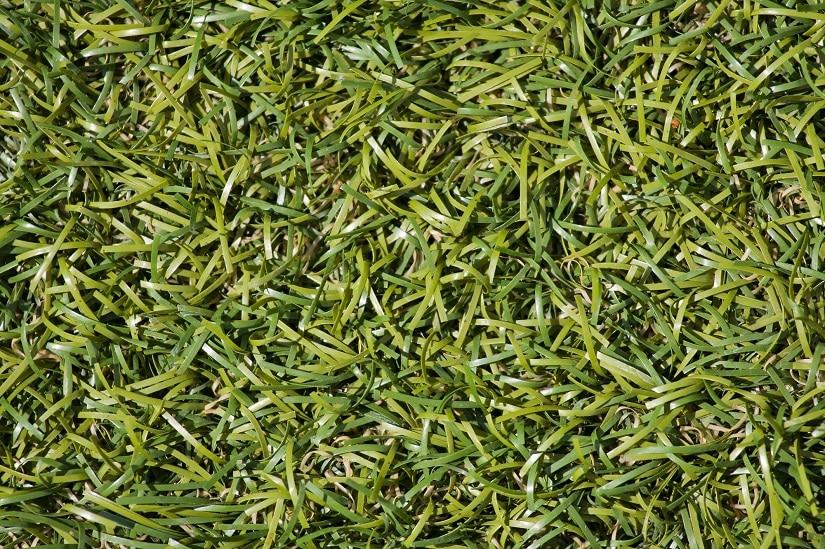 Den hochqualitativen Kunstrasen kann man vom echten Rasen nur schwer unterscheiden.