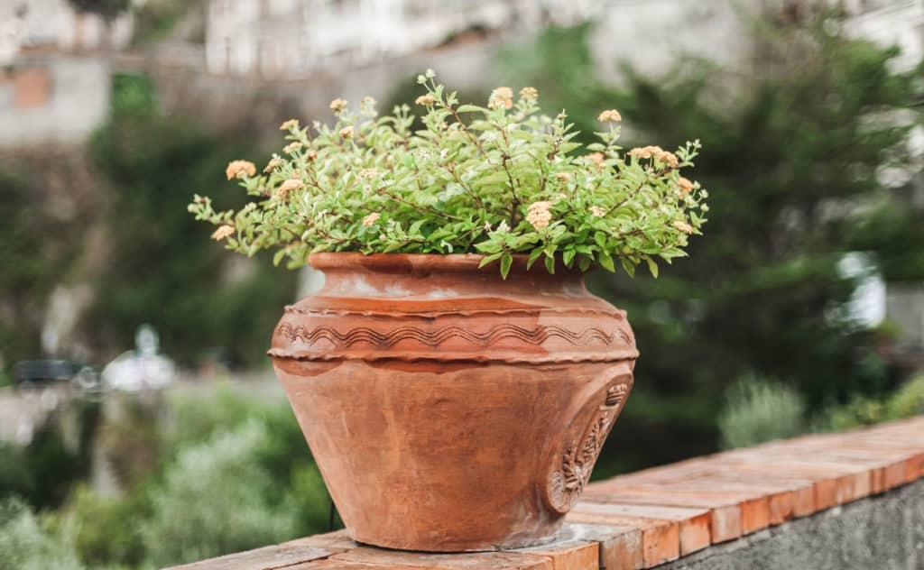 Pflanzenkübel – die wichtigsten Aspekte in der Übersicht