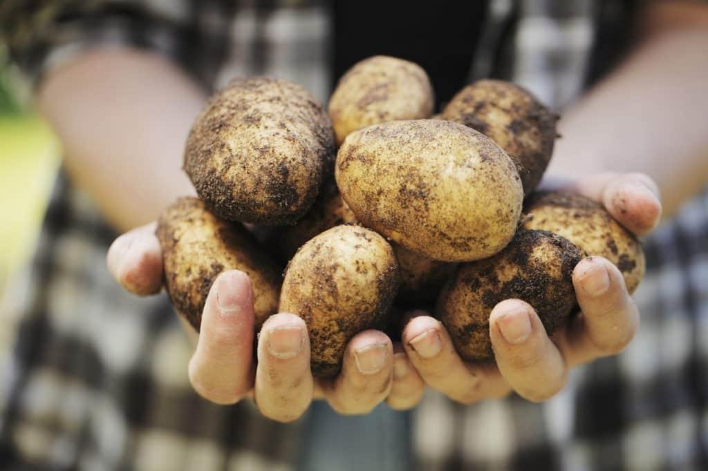 Kartoffel Pflanzsack