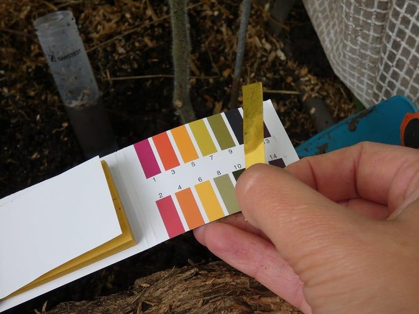 Der pH-Wert des Bodens sollte regelmäßig überprüft werden