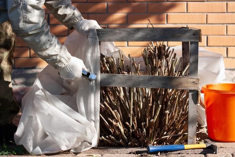 Hier werden Hortensien fit gemacht für den Frost mit Deckmaterial