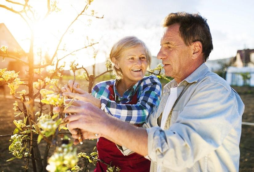 Seniorenpaar schneidet einen Apfelbaum