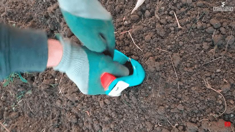 Eine Blumenzwiebel wird eingepflanzt